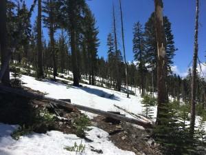 Snow on trail